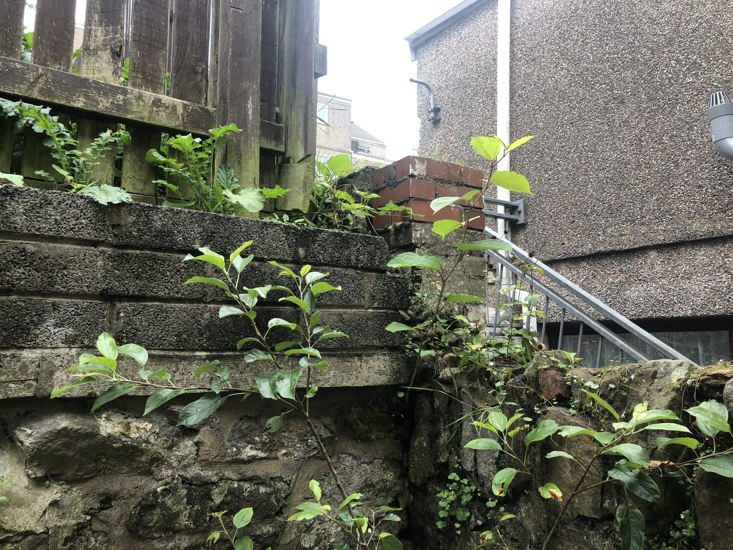 sellimg your house with knotweed